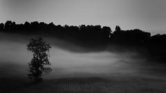 Morning Fog 4 (dbro49) Tags: blackandwhite black tree nature fog barn digital sunrise canon landscape moody atmospheric 40d