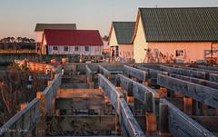 Taylor Landing Structures (dngovoni) Tags: boats building landscape marina maryland sunrise girdletree unitedstates us
