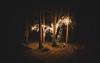 Enchanted Woods (Bunaro) Tags: enchanted woods christmas path under construction forests pitch dark sigma art 24 helsinki suomi finland vuosaari aurinkolahti uutela