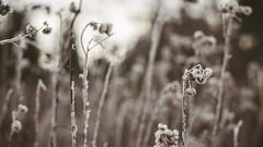 Winter_11 (losing.today) Tags: nature oregon outdoors pacificnorthwest portland pdx portlandor portlandoregon cold coldseason winter