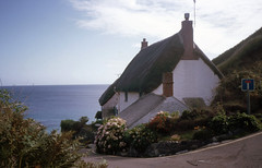 img856 (foundin_a_attic) Tags: 1984 st michaels mount mullion ctcoe cadgwith falmouth rose land cornwall thatched cottage street road flowers uk england