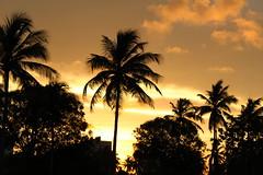 IMG_0593 (vitorbp) Tags: aracaju sergipe brasil bra