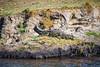 sun bathing at the river banks (werner boehm *) Tags: wernerboehm chobenp safari crocodile krokodil botswana africa