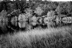 Black & Light Reflections (Missy Jussy) Tags: blackwhite blackandwhite mono monochrome light sunlight reflections shadows trees reservoir grass frost water piethorne piethornevalley rochdale lancashire landscape northwest england canon cannon600d