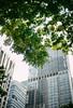 Oh green (bady_qb) Tags: 50mm nikkor dof nature leaf green city urban vsco film sony sonyalpha a7ii singapore street