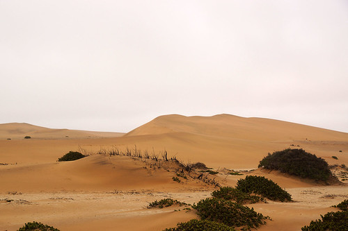 DSC07649 - NAMIBIA 2013