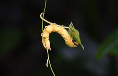 DSC_3959 (olyaterekhova) Tags: nature singapore bukit timah park