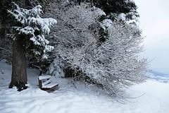 Verschneite Ruhebank am Waldrand (Martinus VI) Tags: grosshöchstetten möschberg winter winterlandschaft hiver schnee nieve snow neige kanton de canton bern berne berna berner bernese schweiz suisse svizzera suiza switzerland y150222 martinus6 martinusvi