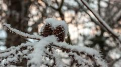 Together. (Janne Fairy) Tags: fir cone fircone ise eis schnee schärfentiefe depthoffield depth field twilight dämmerung sonnenuntergang sunset bokeh tannenzapfen winter winterzeit flickrfriday