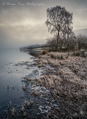 St Mary's Loch - Ice On The Edge (.Brian Kerr Photography.) Tags: scotland scottishborders scottishlandscapes winter weather trees ice frozen frosty cold coldmorning tree landscape outdoor outdoorphotography reflections fog nature photography stmarysloch clouds cloudinversion briankerrphotography briankerrphoto