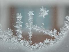 Icy World (R_Ivanova) Tags: nature macro winter window ice frost white sony rivanova риванова скреж зима макро лед fav20