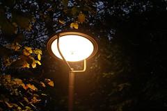 Lone Lantern (Amens Alteraporta) Tags: park light forest narnia lone lantern shining zamdorf zamilapark