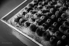MO8_2998.jpg (nimoma) Tags: technorama ferrofluid magnetfeld