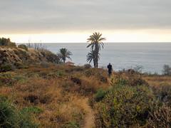 Follow Me (Sun Leads Me On) Tags: nature spain hiking olympus hike atlantic tenerife canaryislands vsco