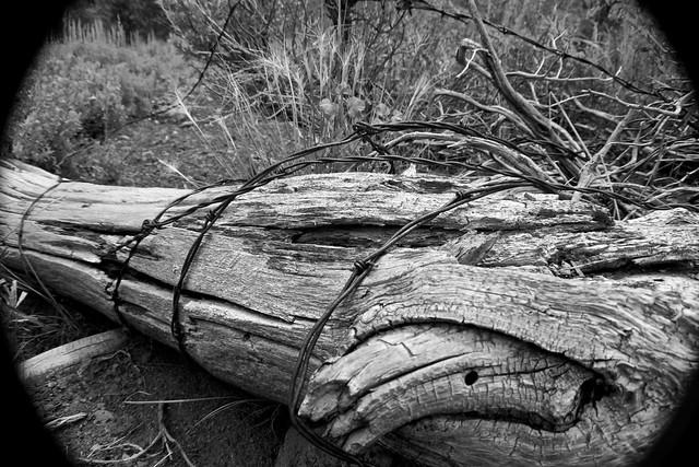 Barbed Log