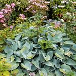 Kiftsgate Court gardens -8 thumbnail