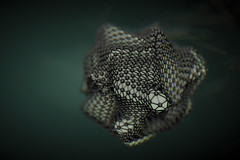 Netted G019-2 (Philippe Put) Tags: abstract colour net shiny dof geometry group free c4d cover sphere use download mass float shape connect platonic philippeput