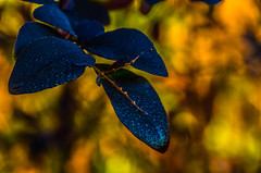 Peaceful..... (tomk630) Tags: virginia rain sunrise drops leaves nature colors bokeh usa