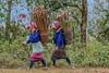 FQ9A1640 (gaujourfrancoise) Tags: asia asie laos gaujour lifeinvillage viedevillage village ethnic ethnie akha