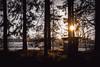 lost cabin    l   2017 (weddelbrooklyn) Tags: natur landschaft sonne abendsonne sonnenuntergang wald waldhütte hütte winter wintersonne gegenlicht licht schatten d5200 nature landscapes sun eveningsun sundown woods cabin wintersun light shadows backlighting backlight