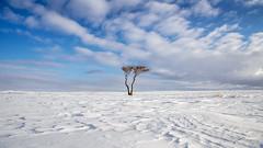 endure.. (drstar.) Tags: snow winternature flickr flickrturkey nothingness bluesky bluewhite lonely lonelytrees endure nikond610 minimal