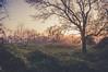 La nature bouguenaisienne (dono heneman) Tags: nature bouguenaisienne paysage landscape leverdesoleil sunrise végétal vegetal végétation arbre tree haie buisson bush lumière light matin morning bouguenais loireatlantique paysdelaloire france pentax pentaxart pentaxk3