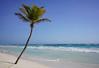Tulum, Mexico (Loïc BROHARD) Tags: tulum mexico yucatan quintanaroo beach palm palmtree