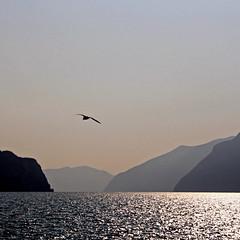 Lago d'Iseo, Italia (pom.angers) Tags: canoneos400ddigital 2009 february castro bergamo lagodiseo lombardia italia italy europeanunion bird gull seagull gabbiano 100 200 300 400 5000