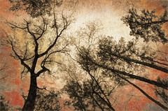 I lift up my eyes (Pejasar) Tags: colorful sky color abstract artistic garvanwoodlandgardens lookup trees garvanweoodlandgardens hotsprings arkansas art arte