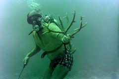 n0005.24 (avaragado) Tags: barbados coralreefclub fd197504 fd197604 fd197905 n0005 tonysmith