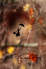 Le passage de Mary [Explore] (Rollerphilc) Tags: canon magie mary poppins silhouette bokeh automne feuille passage 760d
