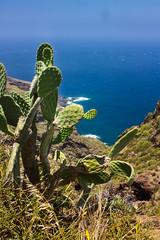 IMG_5565-1 (Andre56154) Tags: spanien spain espana canarias kanaren lapalma meer sea ozean ocean küste coast wasser water steilküste kaktus cactus pflanze himmel sky landschaft landscape