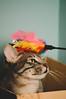 playground. (Nicole Favero) Tags: blu love cat kitty awesome cute cool animals nature cafè crazy car forever mine nicolefavero nikon nikond5000 camera reflex happy happiness smile animal animali gatti gattini crazycatcafè milan play vertical