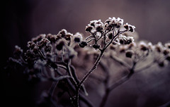 IMG_9985 (outsideartimages) Tags: frost fog winter foliage trees buds moss photography mono bare