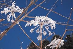 Eisblumen (K.S64) Tags: eisblumen winter pfänder