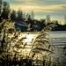 frozen lake like a mirror | berlin | germany | 2014