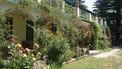 front garden flowers