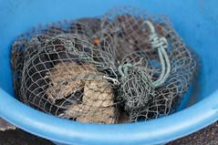 market / July / 2015 / Khon Kaen, Thailand (gudiodotdotdot) Tags: thailand nikon market frog khonkaen thaifood d5000 thaiisan