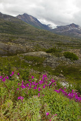 No Man's (Every Man's) Land (MichelleLegere) Tags: mountain fireweed