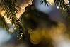Festive season... (grus_p) Tags: light sunlight sun tree spruce piceaabies snow winter festive nature calmness serenity beautyofnature luminanceboréale finland nikon