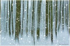 Winter forest - Explore (Rita Eberle-Wessner) Tags: wald forest fog nebel snow schnee trees snowflakes blue winter wood bäume schneeflocken blau icm digitalart