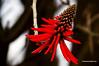 WINTER FLOWER. (Viktor Manuel 990.) Tags: winterflowers floresdeinvierno flower flor winter invierno digitalart artedigital querétaro méxico victormanuelgómezg