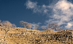 Running up That Hill (plot19) Tags: yorkshire dales landscape light love trees clouds blue hill runing up that nikon north england english uk britain british plot19 photography