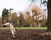 Leaf Fun 🍃 (carolinegiles1) Tags: nikond5200 photography fun embankment mud leaves winter bedford dog jumping