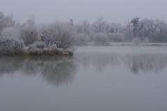 IMGP8589 (OlivierBo35) Tags: mordelles hiver brouillard givre