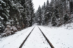 Follow the tracks to the Winter Wonderland. (christiannass) Tags: sony explore sonyslta58 deutschland photography inspired inspiring exploring germany camera flickr traveling outdoors day white tree pointofview winter nature botany snow idyllic tranquility frost travelling