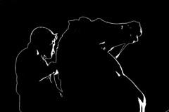 DSC_5595_3188  - Dioscuro - (angelo appoloni) Tags: torino piemonte piazza reale dioscuri cavallo polluce bianco e nero turin piedmont royal square horse pollux black white