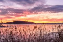 Spur of the Moment (Peter Vestin) Tags: nikondf voigtländerultron4020slii siruin3204x siruik30x adobecreativecloudphotography topazlabscompletecollection alstersstrandbad alster karlstad värmland sweden vänern nature landscape seascape sunrise ice winter