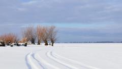 Turawa lake (radimersky) Tags: turawa lake jezioro turawskie śnieg snow frozen zamarznięte zima winter day dzień outdoor landscape willow willows wierzba wierzby krajobraz clouds chmury 3840x2160 panasonic dmclx100 micro four thirds 43 opolskie polska poland europe lumix