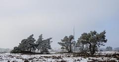 P1180037-9.jpg (loenatik) Tags: assel gelderland kootwijk nature nederland radiokootwijk sneeuw snow tree winter sky